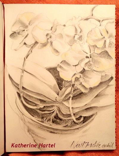 November 17 ~ White orchid