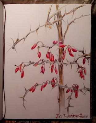 December 7 ~ Prickly & Beautiful